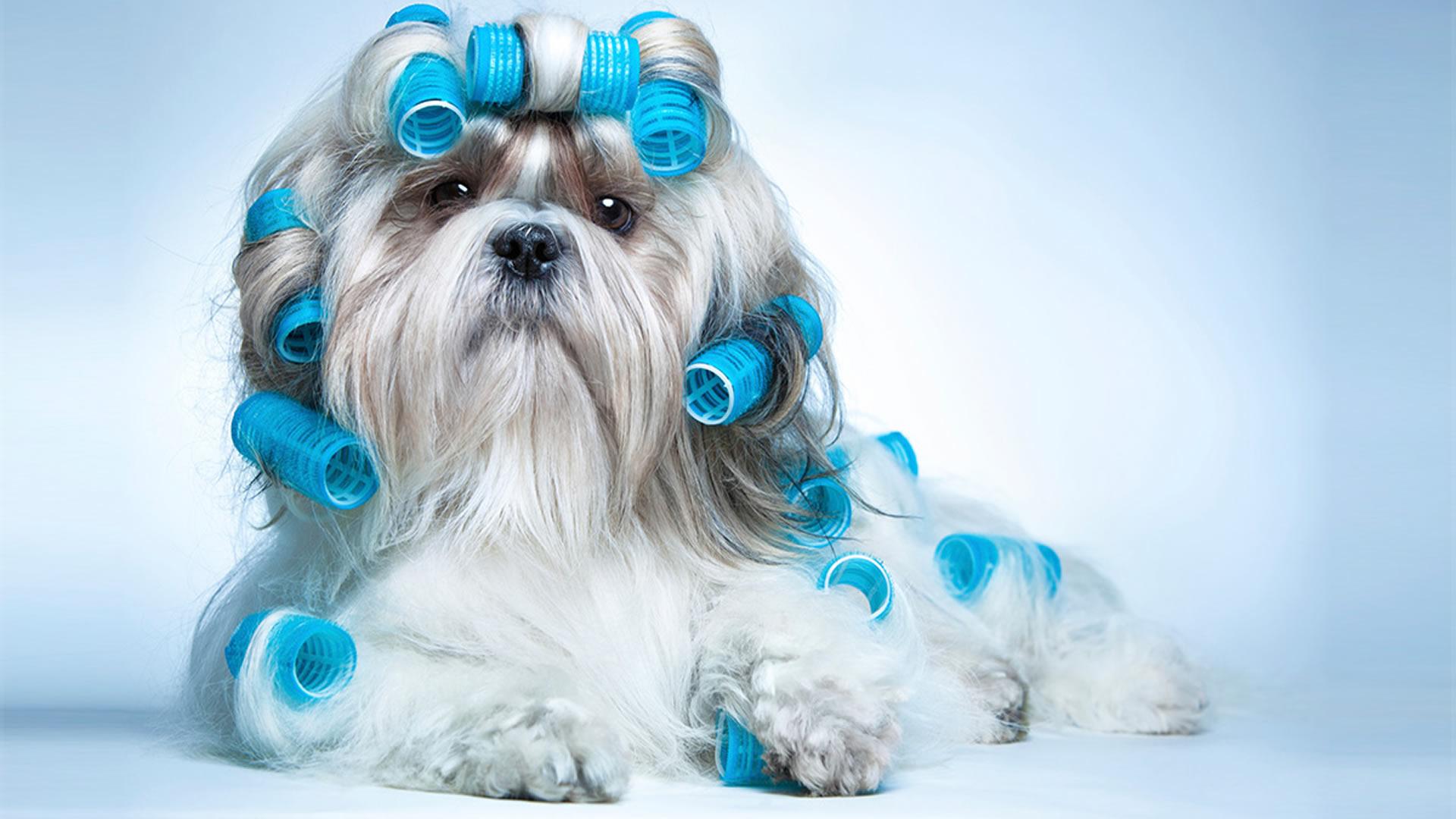 Trattamento SPA Ozonoterapia | Idromassaggio per cani ...