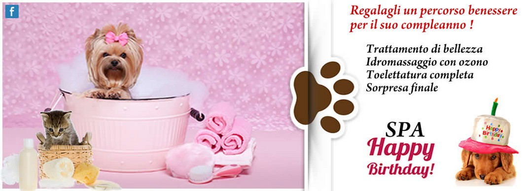 news armony pet toelettatura per cani e gatti torino. Black Bedroom Furniture Sets. Home Design Ideas